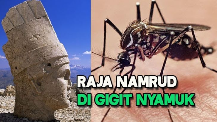 Logika Penciptaan Nyamuk, Antara yang Beriman dan Ingkar